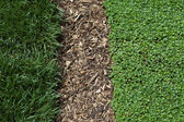 Grass Mulch and Ivy Background — Stock Photo