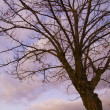 Tree in autumm at sunset — Stock Photo