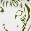 Tiger head grafitti close-up, segment street art — Stock Photo #10113294