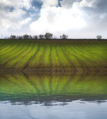 Agriculture field, green nature with water reflection effect — Stock Photo