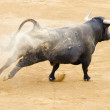 Stock Photo: Black bull in spanish bullfighting arena