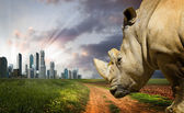 Powerful rhino at sunset. Nature against progress — Stock Photo