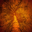 Royalty-Free Stock Photo: Fire in the forest, conceptual