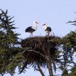 Roof with storks - Stock Photo