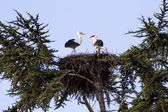 Roof with storks — Stock Photo