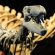 Dinosaur Skeleton — Stock Photo #8711036