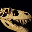 Dinosaur Skeleton — Stock Photo #8711074