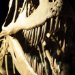 Dinosaur Skeleton — Stock Photo #8711103