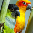 Royalty-Free Stock Photo: Parrots