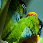 Parrots — Stock Photo #8712804