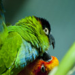 Parrots — Stock Photo #8712854