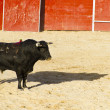 Stock Photo: Spanish bull. Bullfight.