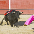 Royalty-Free Stock Photo: Matador and bull in bullfight. Madrid, Spain.