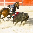 Stock Photo: Bullfight on horseback. Typical Spanish bullfight.