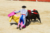 Fighting bull picture from Spain. Black bull — Stock Photo