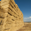 Straws of hay, grain crop field - Stock Photo