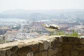 Denia alicante view from castle — Stock Photo
