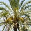 Palm tree in Spain — Stock Photo #8750089