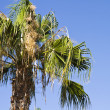 Stock Photo: Palm tree in Spain