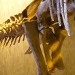Dinosaur bones, educational exposure — Stock Photo