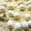 Natural egg farm - Foto Stock