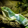 Little lizard resting in a small tree — Stock Photo #8756205