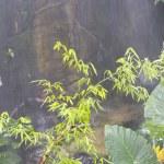 Jungle on the monsoon. — Stock Photo #8756523