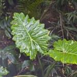 Jungle on the monsoon. — Stock Photo #8756571