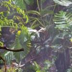 Jungle on the monsoon. — Stock Photo #8756590