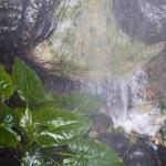 Jungle on the monsoon. — Stock Photo #8756618