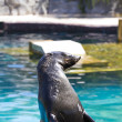 Beautiful sea lion in a natural environment - 