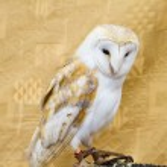 Owl portrait — Stock Photo