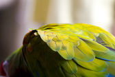 Green parrot feathers — Stock Photo