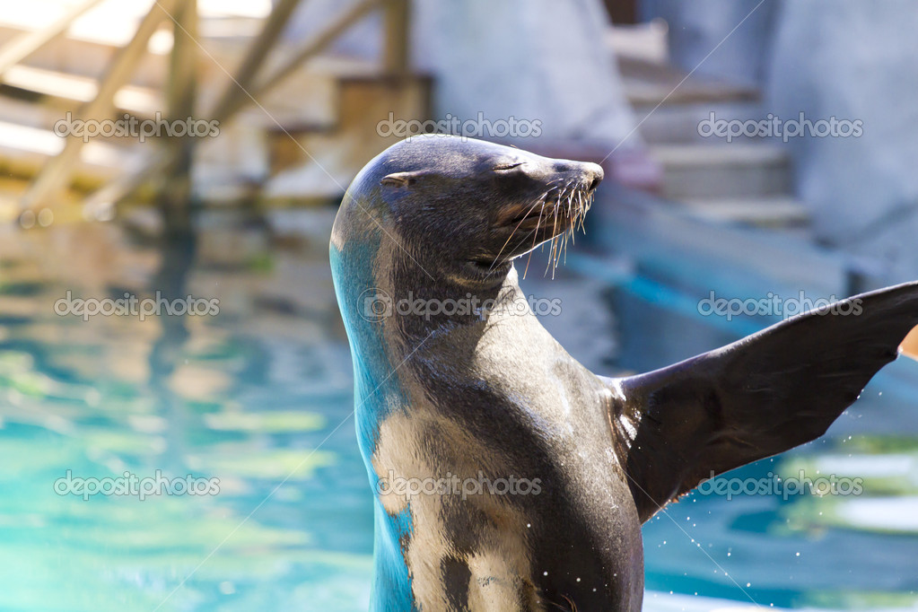 Beautiful sea lion in a natural environment — Stock Photo #8757856