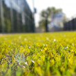 Artificial grass — Stock Photo #8787366