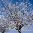 Snow tree — Stock Photo