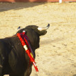 Spanish bull. Bullfight. — Stock Photo