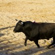 Spanish bull. Bullfight. — Foto Stock