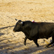 Spanish bull. Bullfight. — 图库照片