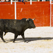 Spanish bull. Bullfight. - Stockfoto