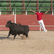 Fighting bull — Stock Photo