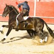 Bullfight on horseback. Typical Spanish bullfight. — Stock Photo