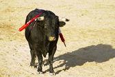 Spanish bull. Bullfight. — Stock Photo