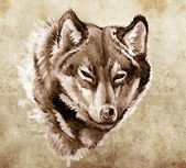 Schets van de tatoeage kunst, illustratie van een wolf hoofd — Stockfoto