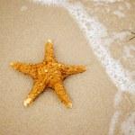 A starfish on sand — Stock Photo