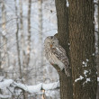 Stock Photo: Owl on a tree