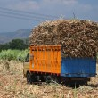 Stock Photo: Sugarcane transportation