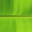 Leaf background — Stock Photo #8679501