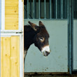 Shy Donkey — Stock Photo #8665917