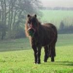 A small pony — Stock Photo